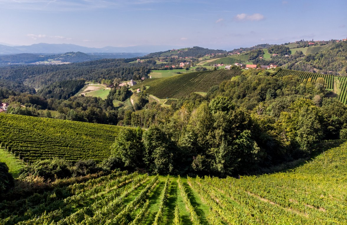 Property in 8442 Kitzeck im Sausal: Rarity with value - wine idyll in a sensational panoramic position - picture 2
